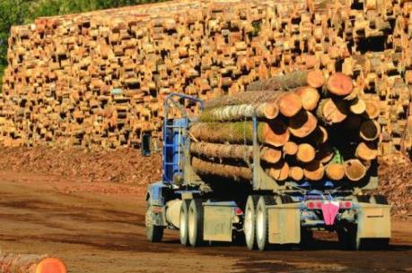 Cơ hội nào cho gỗ xuất khẩu của Việt Nam?