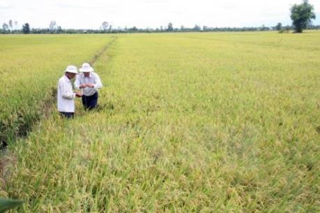 Bắc Giang tạo điều kiện cho doanh nghiệp liên kết sản xuất theo chuỗi