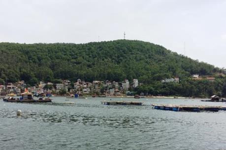 Đã có kết quả xét nghiệm mẫu cá chết ở Nghi Sơn, Thanh Hóa