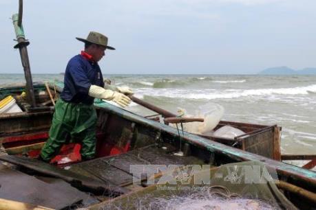 Hà Tĩnh: Lập danh sách các đối tượng bị ảnh hưởng sự cố môi trường