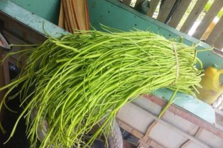 Tiếp tục phát hiện cơ sở ngâm rau muống bằng hóa chất tại Tp. Hồ Chí Minh