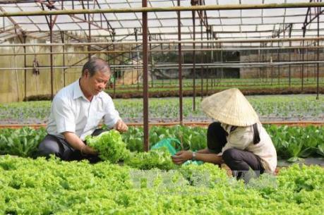 Kiên Giang tháo gỡ khó khăn cho kinh tế tập thể