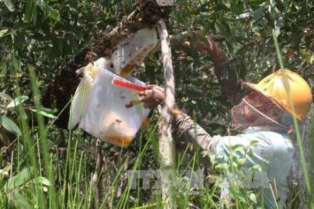 Làm rõ thông tin chất lượng mật ong ở Cà Mau