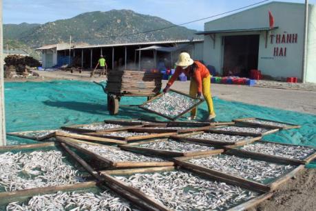Rà soát nhu cầu cho vay, xử lý nợ bị ảnh hưởng do sự cố môi trường biển miền Trung
