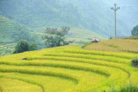 Bắt đầu Tuần văn hóa Danh thắng quốc gia Ruộng bậc thang huyện Mù Cang Chải 2016