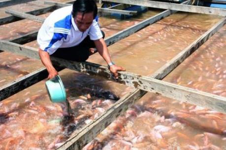 Tăng tính cạnh tranh của sản phẩm cá điêu hồng