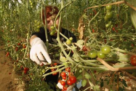 """Vốn """"rót"""" cho nông nghiệp hữu cơ ngày một nhiều lên"""