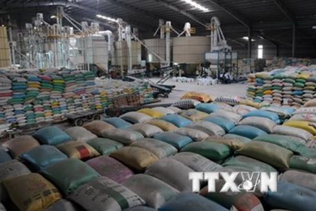Sớm trình phương án cổ phần hóa Tổng Công ty Lương thực miền Nam
