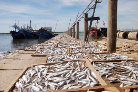 Hà Tĩnh sẽ tiêu hủy gần 12 tấn hải sản không đảm bảo an toàn thực phẩm