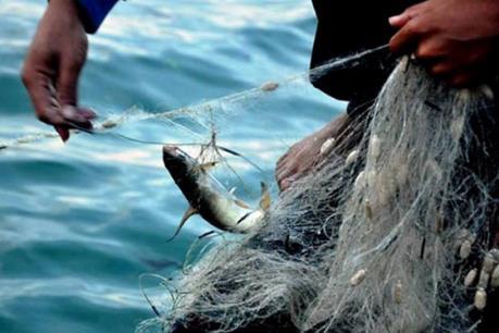 Hải sản ở 4 tỉnh miền Trung: Loại nào là an toàn?