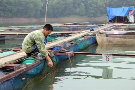 Làm sao để nuôi cá lồng, bè bền vững trên sông, hồ?