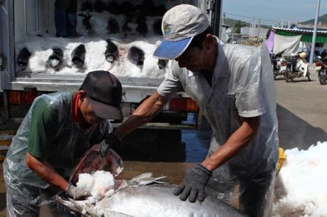 Bức xúc do ô nhiễm nặng tại khu cảng cá Sa Huỳnh