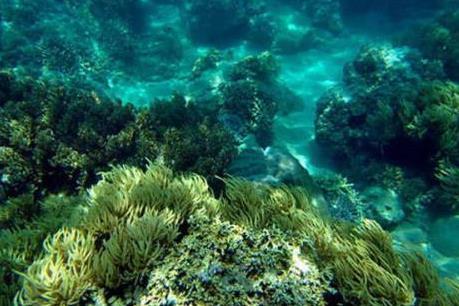 San hô Côn Đảo phục hồi vẻ đẹp tự nhiên