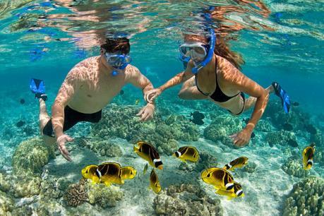 """""""Hồi sinh"""" san hô ở vịnh Nha Trang hướng đến phát triển du lịch lặn biển"""