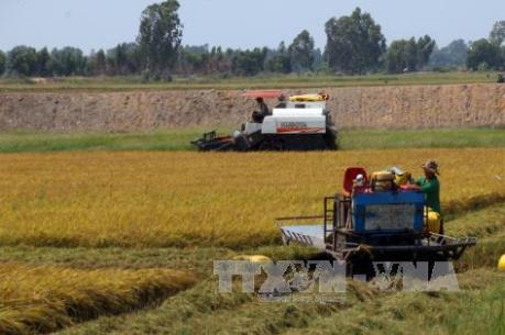 Thị trường lúa gạo Việt Nam chưa có chuyển biến tích cực