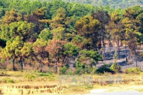 Bất cập trong quản lý rừng ở Hà Nội