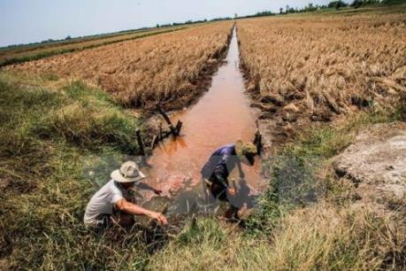 Cần cái nhìn đa chiều trong tái cơ cấu ngành nông nghiệp