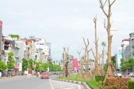 Đặt hàng các chuyên gia thiết kế trồng cây xanh ở Thủ đô