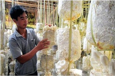 Mạnh dạn khởi nghiệp, vươn lên làm giàu ngay tại quê hương Bắc Giang
