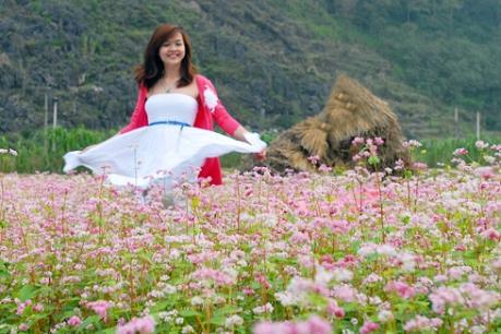 Sắp diễn ra Lễ hội hoa Tam giác mạch Hà Giang năm 2016