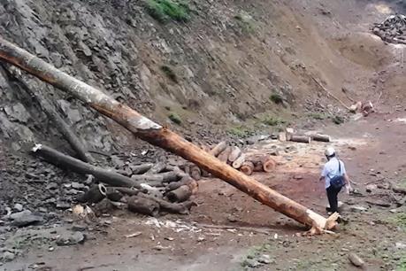 Bắt vụ khai thác, vận chuyển gỗ trái phép tại Đắk Lắk