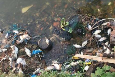 CẢNH BÁO:  Không sử dụng cá chết tại hồ Tây làm thực phẩm