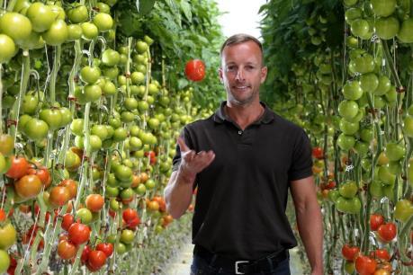 Nhà kính trồng cà chua sử dụng năng lượng Mặt Trời và nước biển