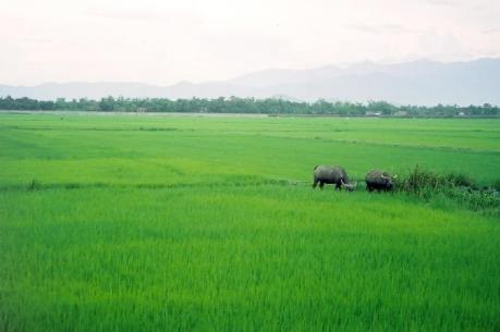 Chuyển mục đích sử dụng đất tại tỉnh Nghệ An