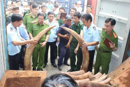 Phát hiện lô hàng nhập khẩu chứa hơn 2 tấn nghi là ngà voi