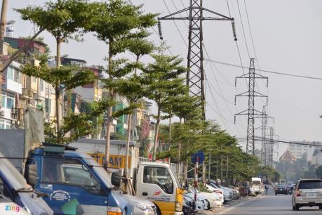 Hàng trăm cây xanh trồng dưới đường điện cao thế tại Hà Nội