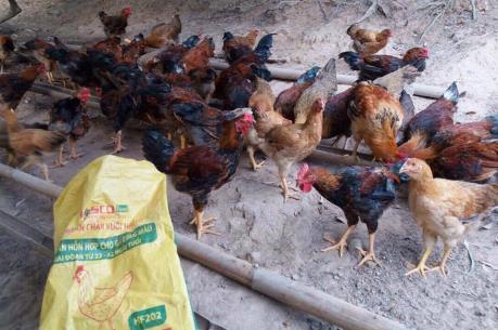 Giải pháp giúp người nuôi gà đồi Yên Thế tiết kiệm chi phí