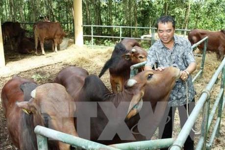 Hà Nội xây dựng 5 vùng chuyên canh sản xuất giống bò thịt