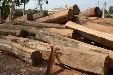 """Khởi tố vụ án """"Vi phạm các quy định về khai thác và bảo vệ rừng"""" ở huyện Ia Grai"""