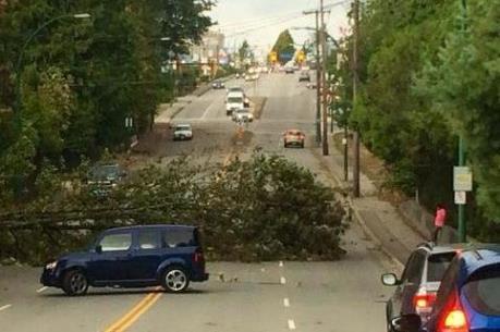 Canada: Hơn 50.000 dân rơi vào cảnh mất điện vì bão lớn