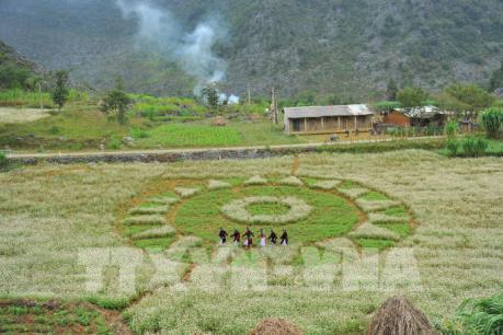Ấn tượng Lễ hội hoa Tam giác mạch tỉnh Hà Giang