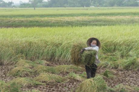 Ứng phó với bão số 7: Nam Định dồn toàn lực chống bão