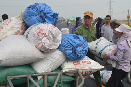 Ứng phó với bão số 7: Thái Bình di dân vào trong đê chính, đến nơi trú bão an toàn