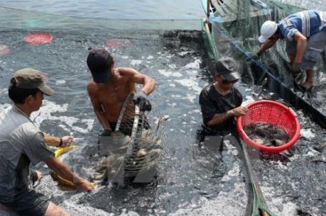 Nam Định phát triển nuôi trồng và đánh bắt thủy sản bền vững