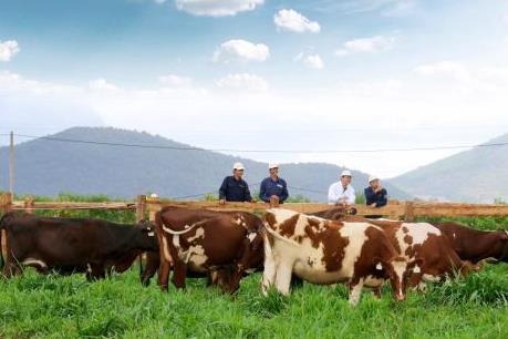 Vinamilk lập trang trại bò sữa organic chuẩn châu Âu đầu tiên tại Việt Nam