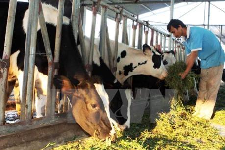 Hà Nội sẽ có trạm thụ tinh nhân tạo sản xuất tinh bò chất lượng cao