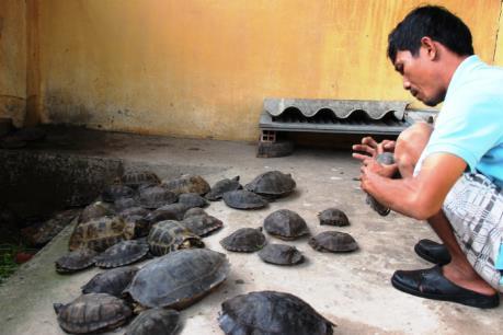 Tây Ninh tạm giữ 66 cá thể rùa nhập lậu từ Campuchia
