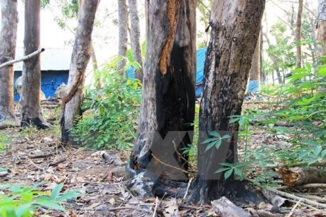 Đắk Nông: Xô xát vì tranh chấp đất rừng làm 3 người chết và nhiều người bị thương