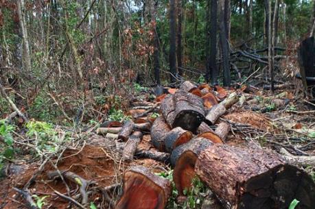 Khẩn trương điều tra vụ giết bảo vệ rừng tại Đắk Nông