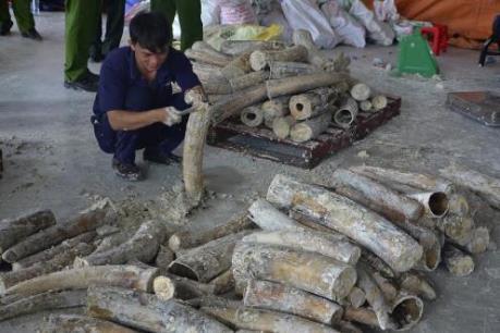 Phó Thủ tướng Trương Hòa Bình chỉ đạo điều tra làm rõ đường dây buôn lậu ngà voi