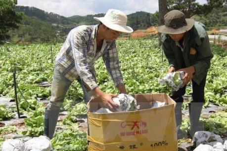 Xuất khẩu rau quả có thể sẽ tiếp tục bứt phá trong năm 2017