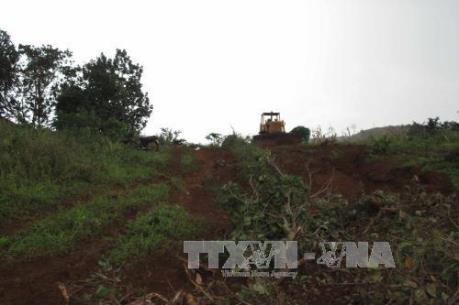 Vụ nổ súng tranh chấp đất rừng ở Đắk Nông: Một đối tượng ra đầu thú