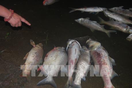 Vụ cá chết tại hồ Linh Đàm: Công bố kết quả kiểm tra nguồn nước