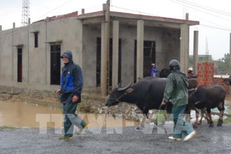 Dự báo thời tiết: Trung Bộ tiếp tục có mưa to đến rất to trong 2 ngày tới