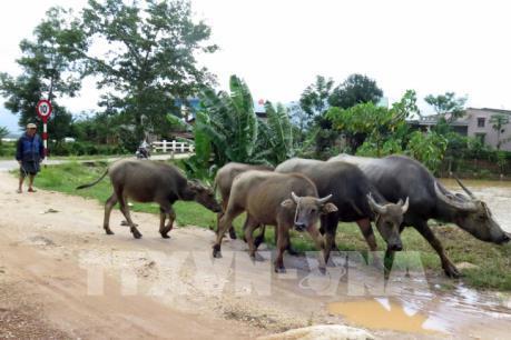 Quảng Nam: Người dân vùng hạ du khẩn trương đối phó với lũ do nhà máy thủy điện xả nước