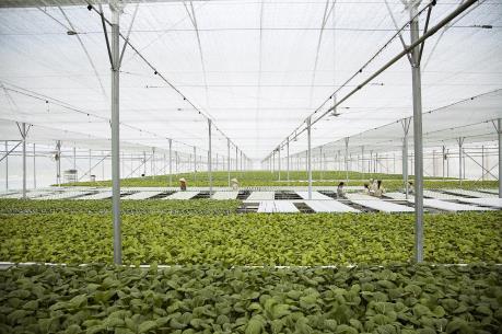 Vingroup liên kết với 1.000 hợp tác xã và hộ nông dân cung ứng nông sản sạch và an toàn